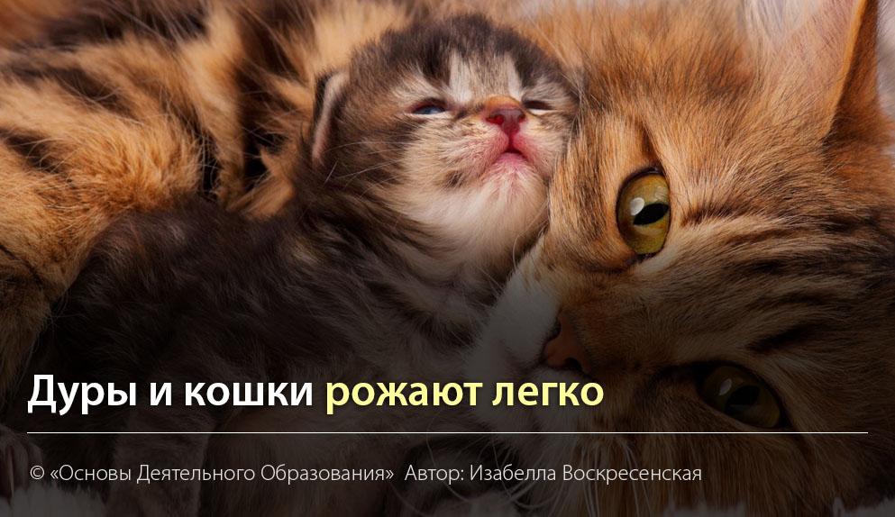 """""""Дуры и кошки рожают легко."""" Автор Изабелла Воскресенская"""
