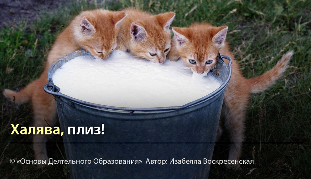 """""""Халява, плиз!"""" Автор Изабелла Воскресенская"""