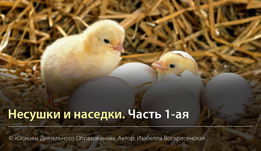 """""""Несушки и наседки. Часть 1-ая."""" Автор Изабелла Воскресенская"""